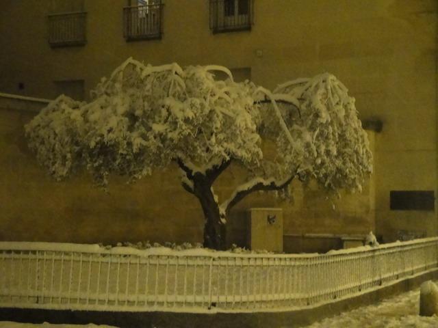 Montpellier sous la neige : l'olivier de la vieille porte