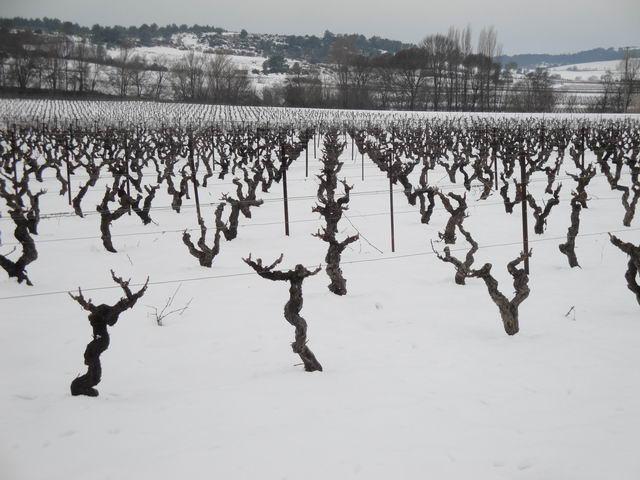 Neige à Combaillaux : des vignes enneigées !