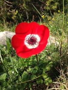 Jolie fleur du printemps 2016